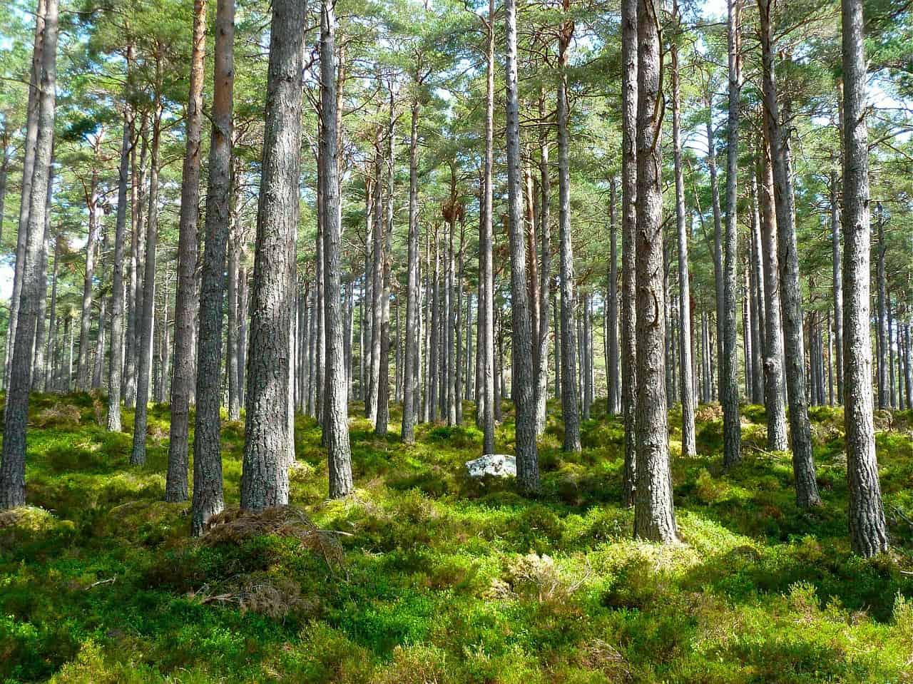 Mois de la Forêt : Mint Energie lance le défi « 100 000 arbres plantés »